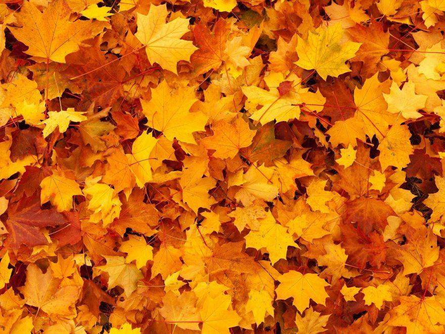 come truccarsi autunno